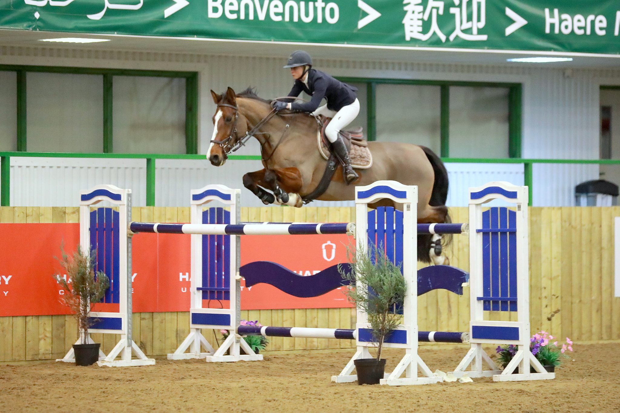 What goes in to photographing a Showjumping course?